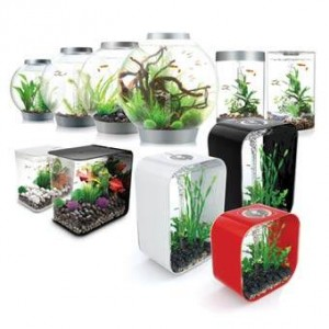 Reef One biOrb aquariums